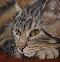 Pastellmalerei, Tigerkatze, Malerei, Haustier