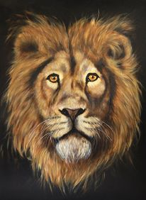Löwe, Tierwelt, Ölmalerei, Großkatze