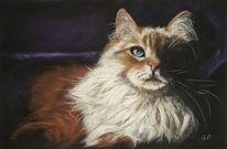 Haustier, Pastellmalerei, Malerei, Katze