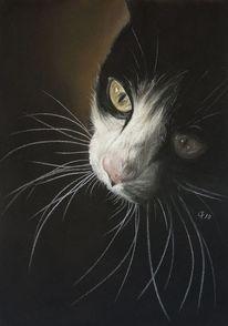 Pastellmalerei, Katze, Malerei, Haustier
