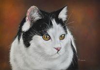 Pastellmalerei, Tuxedo, Fotorealismus, Katze