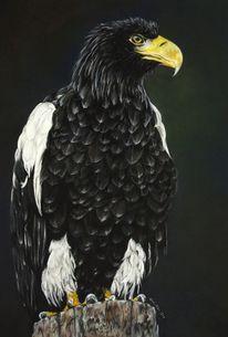 Tiere, Tierwelt, Malerei, Adler