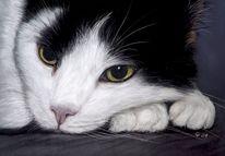 Pastellmalerei, Haustier, Malerei, Katze