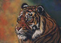 Pastellmalerei, Malerei, Tiger, Tierwelt