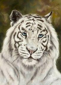 Pastellmalerei, Fotorealismus, Tierwelt, Weiß