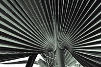 Natur, Struktur, Schwarz weiß, Fotografie