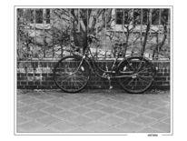 Stillleben, Schwarz weiß, Fahrrad, Romantisch