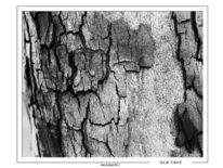 Konstrast, Abstrakt, Fotografie, Baum