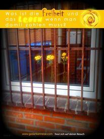 Blumen, Rose, Freiheit, Leben