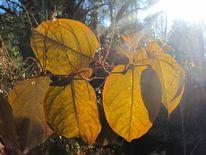 Blätter, Natur, Sonne, Laub