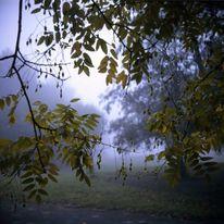 Nebel, Bochum, Lubitel, Herbst