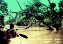 Fluss, Nest, Schwarz, Fotografie