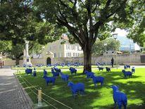 Schaf, Baum, Blau, Fotografie