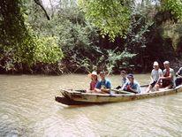 Boot, Fluss, Mangroven, Fotografie