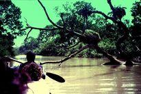 Baum, Fluss, Schwarz, Nest