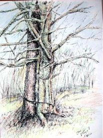 Natur, Tuschezeichnung, Baum, Zwillingsbäume