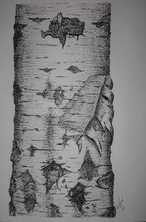 Tuschezeichnung, Birkenrinde, Birkenstamm, Holz