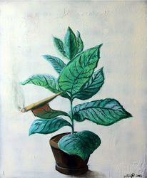 Rauchen, Blätter, Blumentopf, Tabakpflanze
