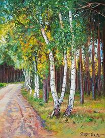 Wald, Weg, Birken, Sommer