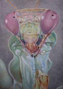 Tiere, Gottesanbeterin, Irina wall, Tiermalerei