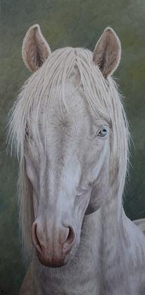 Tierportrait, Tiere, Pferde, Tiermalerei