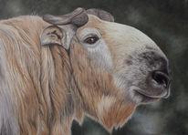 Takin, Tierportrait, Tiere, Tiermalerei