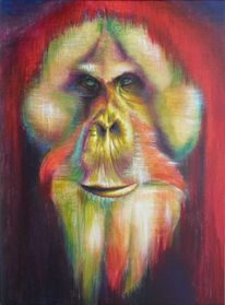 Orang utan, Portrait, Borneo, Menschenaffen
