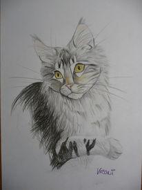 Buntstiftzeichnung, Main coon, Grau, Katze
