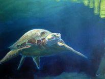 Wasser, Licht, Schildkröte, Unterwasser