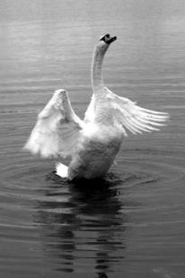 See, Schwarzweiß, Fotografie, Avenches
