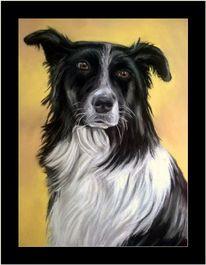 Tierportrait, Hund, Pastel card, Schwarz weiß