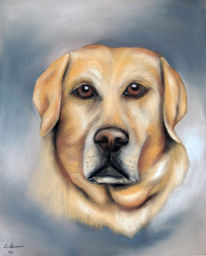 Pastellmalerei, Hund, Retriever, Tierportrait