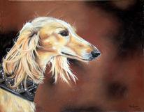 Tiere, Hund, Tierportrait, Hundeportrait