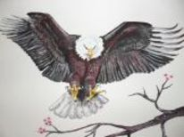Kirschblüten, Adler, Tiere, Fliegen