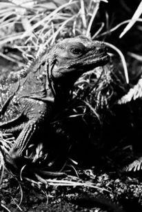 Tiere, Waran, Reptil, Fotografie