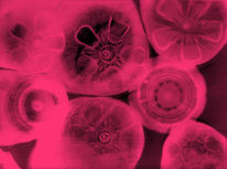 Fotogramm, Fotografie, Abstrakt, Pink