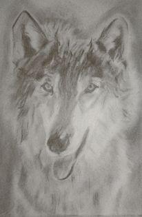 Portrait, Wolf, Bleistiftzeichnung, Zeichnung