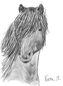 Skizze, Isländer, Pferde, Pony