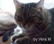 Katze, Mauzi, Portrait, Fotografie