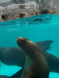 Wasser, Seehund, Tiergarten, Fotografie