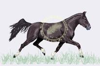 Howrse, Pferde, Pony, Digitale kunst