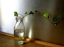 Wasser, Flasche, Arbeitsplatz, Efeu
