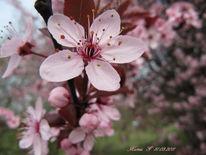 Bleme, Fotografie, Rosa, Farben