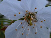 Baumblüte, Weiß, Orange, Fotografie