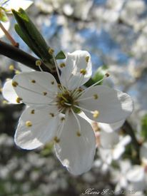 Frühling, Blumen, Weiß, Fotografie