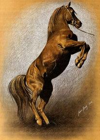 Pferde, Malerei, Portraitkunst, Tierportrait