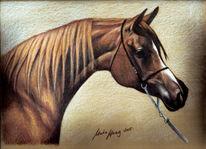 Pferdeportrait, Portrait, Malerei, Araber