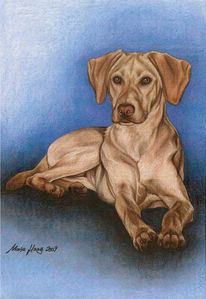 Hundeportrait, Malerei, Tiermalerei, Hund