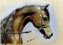 Malerei, Portraitkunst, Tierportrait, Pferdeportrait