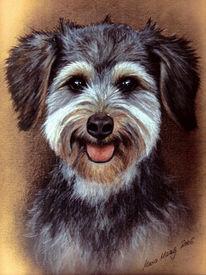 Hund, Hundeportrait, Portraitkunst, Tierportrait
